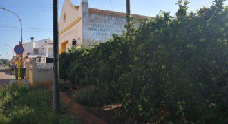 Campo de naranja Cogullada-Carcaixent