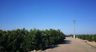 Campo de naranja Carcaixent – Marjaletes